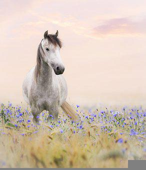 Horse, Thoroughbred, Landscape, Summer, Flowers