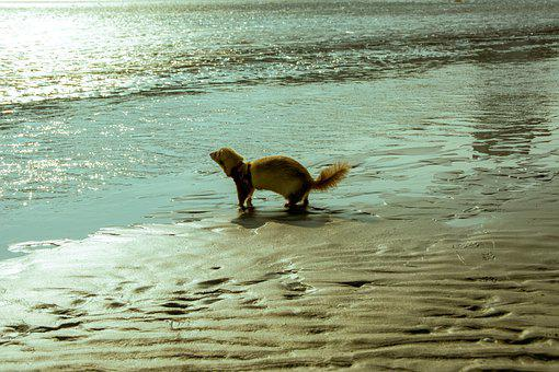 Ferret, Beach, Sand, Dunkirk, North, Water, Dune, Sea