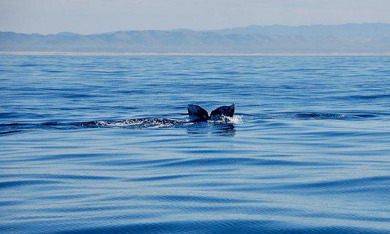 Whale, Tail, Disappearing, Ocean, Water, Mammal
