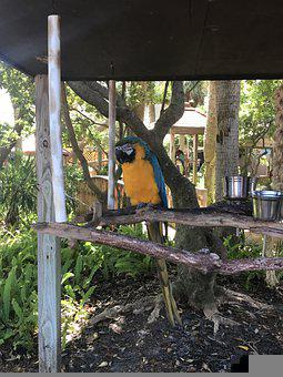 Mccaw, Bird, Wildlife, Colorful, Tropical