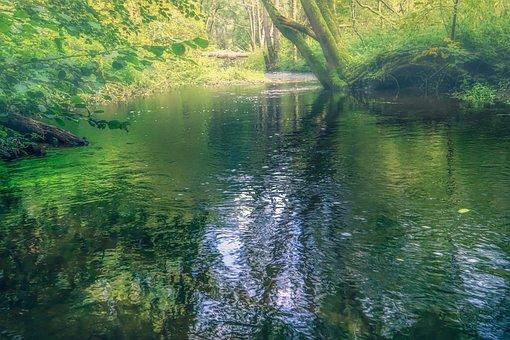 River, Trees, Bach, Forest, Haze, Fog, Sunrise