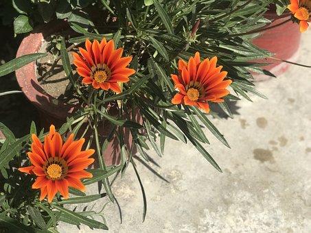 Flower, Plants, Bloom, Nature, Spring, Petals, Dew