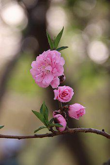 Nature, Plant, Spring, Flower, Spring Flower