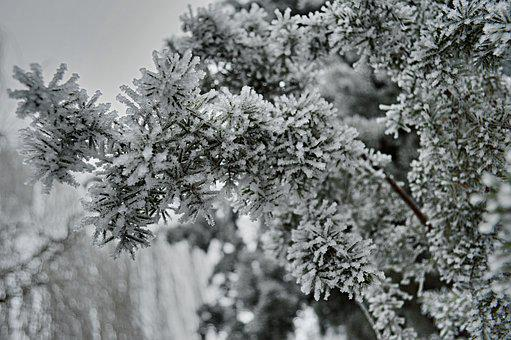 Winter, Frost, Tree, Nature