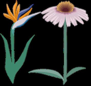 Flower, Petals, Leaves, Foliage, Flora, Botany, Drawing
