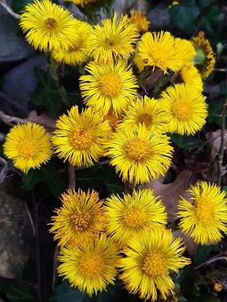 Flowers, Plant, Garden, Yellow Flowers, Petals, Bloom