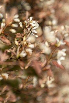 Flowers, Bush, Plant, Hedge, Shrub, Bloom, Spring
