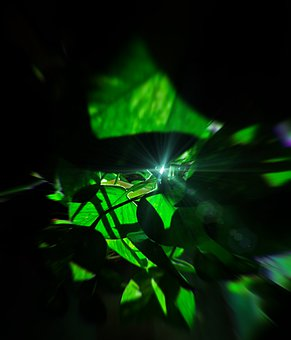 Tyndall Effect, Light, Ray, Leaves, Fringing