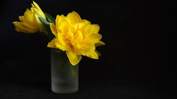 Yellow Tulips, Flowers, Small Flower Vase, Tulips