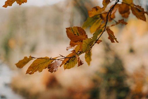 Autumn, Leaves, Foliage, Autumn Leaves, Autumn Foliage