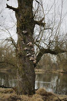 Tree, Mushrooms, Bank, River, Sponge, Fungi, Polypores