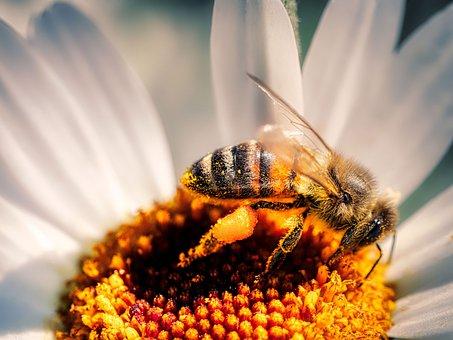 Bee, Flower, Pollen, Pollinate, Pollination