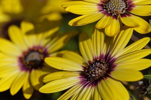 Yellow, Flowers, Petals, Bloom, Blossom, Flora, Nature