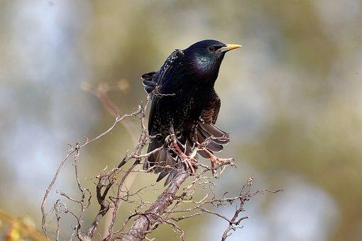 Starling, Bird, Branch, Perched, Animal, Wildlife
