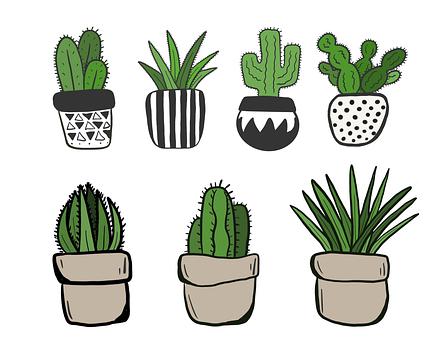 Succulents, Cacti, Plants, Plant Pots, Potted Plants