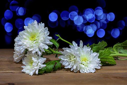 Chrysanthemums, Flowers, Bokeh, Cut Flowers, Petals
