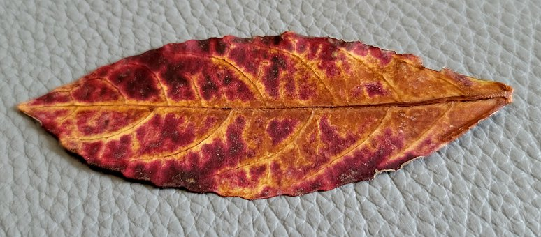 Leaf, Old, Color