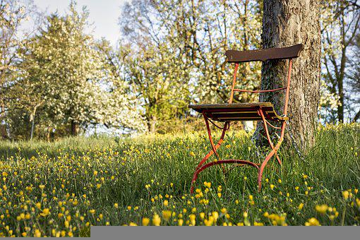 Chair, Tree, Meadow, Flowers, Spring, Plant, Grass