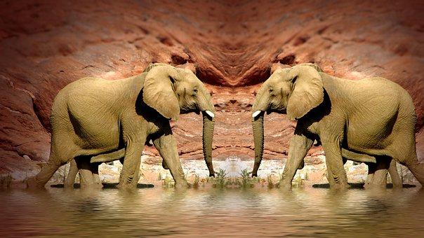Elephant, Mammal, Animals, Fangs, Herbivorous, Large