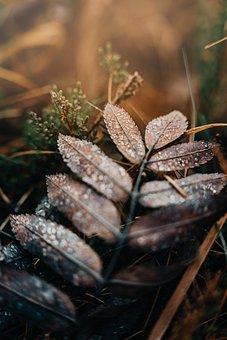 Leaves, Plant, Forest, Foliage, Nature, Closeup