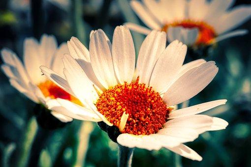 Flower, Nature, Pollen, Blossom, Bloom, Macro, Nectar