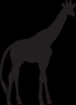 Giraffe, Clip Art, Animal, Silhouette, The Silhouette