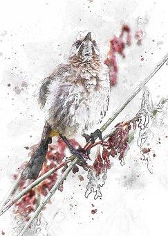 Cape Sugarbird, Bird, Photo Art, Sugarbird, Branch
