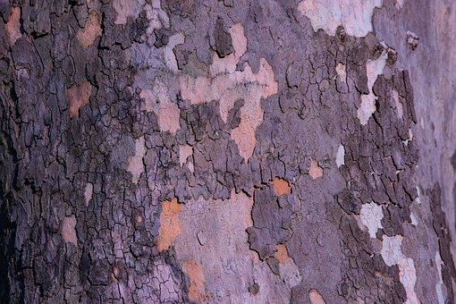 Bark, Tree, Wood, Abstract, Texture, Log, Nature
