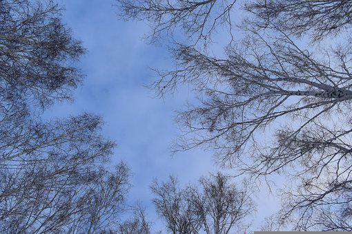 Sky, Clouds, Nature, Autumn, Trees, Spring, Blue