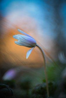 Flowers, Nature, Spring, Bloom, Flora, Plant, Landscape