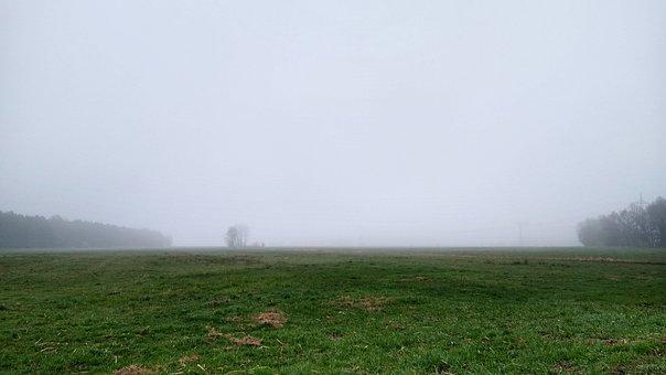 Germany, Brandenburg, Nature, Field, Winter, Fog, Tree