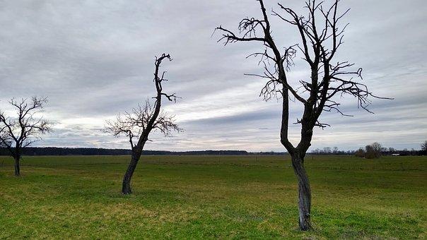 Germany, Brandenburg, Nature, Winter, Trees, Baruth