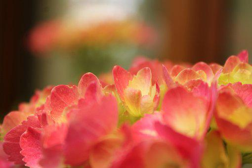 Flowers, Spring, Colors, Colorful, Happy, Shapes