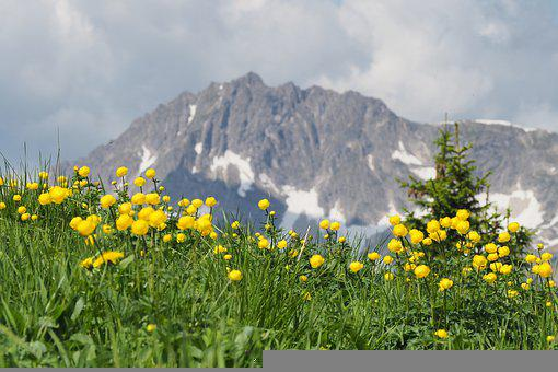 Flowers, Meadow, Mountains, Grass, Yellow Flowers