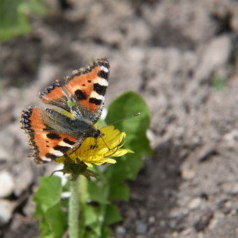 Butterfly, Nature, Spring, Flower, Animal, Insect