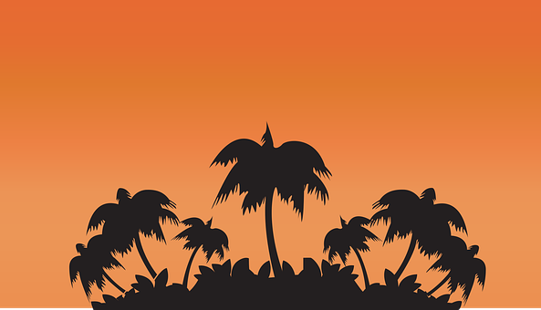 Orange Sunset, Palm, Sunset, Island, Summer, Nature