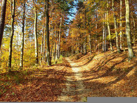 Autumn, Forest, Nature, Foliage, Trees, Landscape