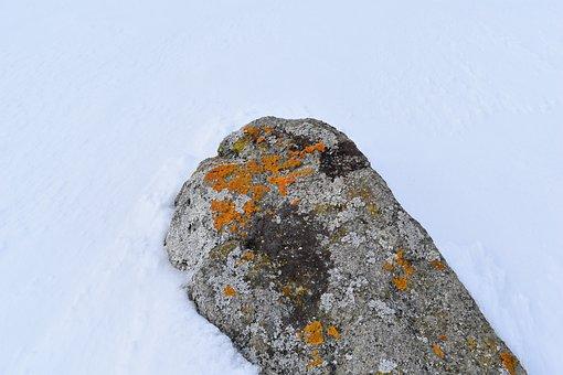Rock, Lichen, Snow, Stone, Orange Lichen, Winter
