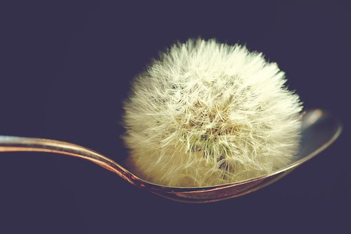 Dandelion, Spoon, Wish You, Blow, Flying, Seed, Plant