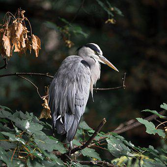 Bird, Wildlife, Animal, Nature, Birdwatching, Fauna