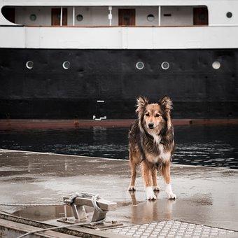 Dog, Harbor, Ship, Boat, Pet, Harbour, Marine, Port