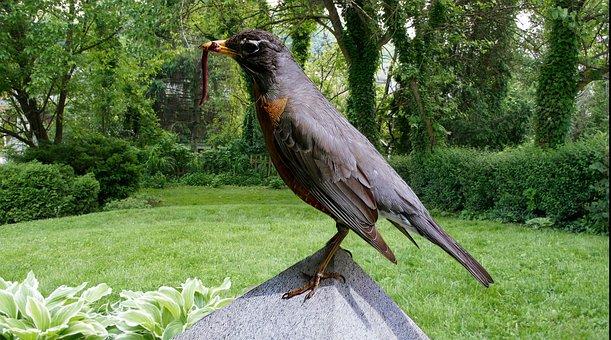 American Robin, Bird, Earthworm, Perched, Animal