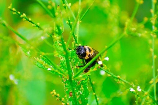 Bees, Pollination, Honey, Bee, Spring, Summer, Flower