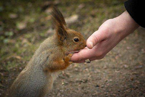 Squirrel, Animal, Feeding, Care, Hand, Kindness, Share