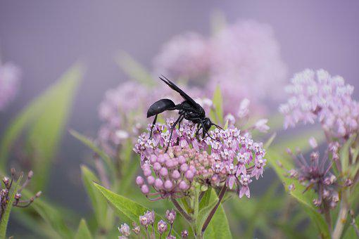 Nature, Bees, Insects, Pollination, Flower, Fauna