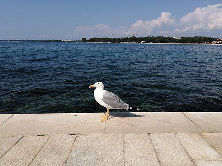 Seagull, Sea, Blue, Clear Sky, Beach, Water, Bird