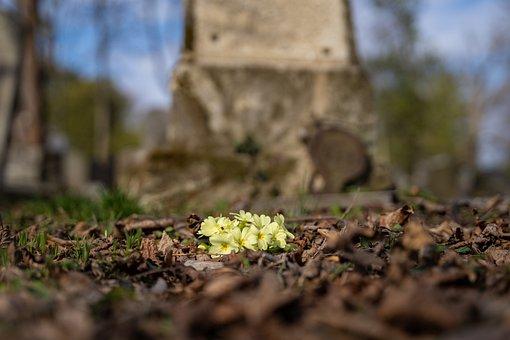 Wild Primrose, Flowers, Dried Leaves, Primrose