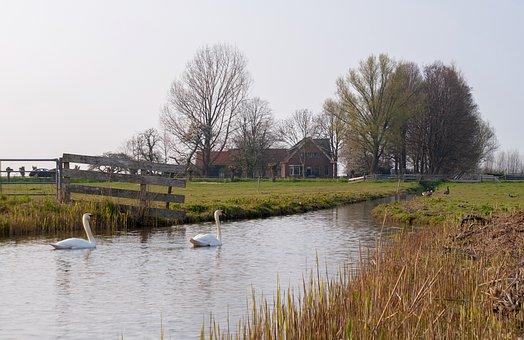 Swan, Swans, Bird, Farm, Farmer, Countryside, Air