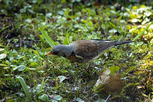 Birds, Finch, Feathers, Plumage, Ave, Avian