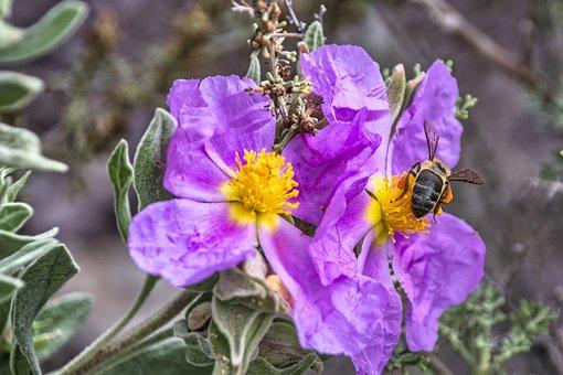 Flowers, Bee, Pollen, Pollinate, Pollination